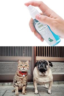 라이온 애완동물 키스 브레스 스프레이 80ml